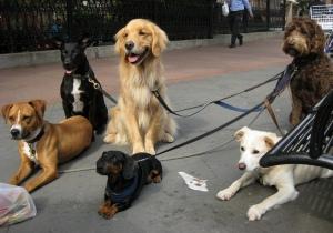 """Oh, würde die Wirtschaft doch nur so gut hören wie diese Hunde. Bild: """"dogwalking in Tribeca"""" von Kristine Paulus. Lizenz: Creative Commons"""