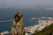 Die berühmten Äffchen findet man auf vielen Bildern von Gibraltar. Bild: Gibraltar, von Richard Tanguy via flickr.com. Lizenz: Creative Commons