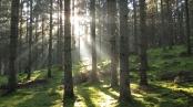 Es wäre so schön in Schwedens Wälder, wenn nicht alles voll von Mücken wäre. Bild von Christian Theede Christianson via flickr.com. Lizenz: Creative Commons