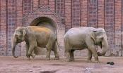 """Irgendwann muss man eigene Wege gehen. Bild: """"Stille Trennung"""" von C MB 166, aufgenommen im Zoo von Leipzig, geteilt über flickr.com. Lizenz: Creative Commons"""